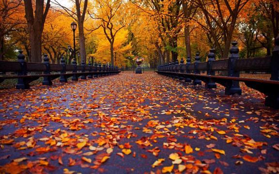 清新迷人的初秋风景图片