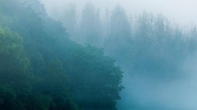 绝美的大自然雾景摄影