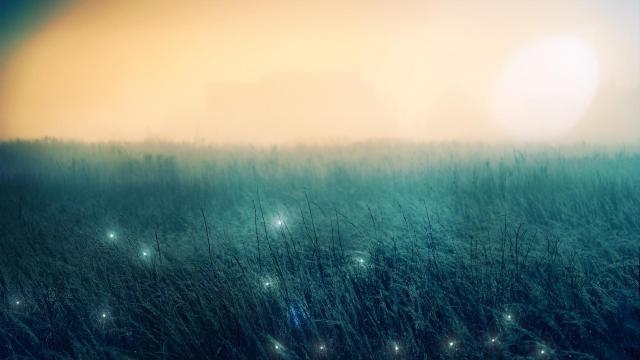 仙境般的薄雾森林世界