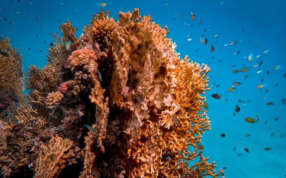 隐秘的海底世界绝美风光