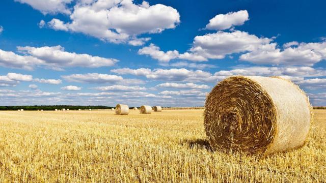 秋天草原上丰收的草垛