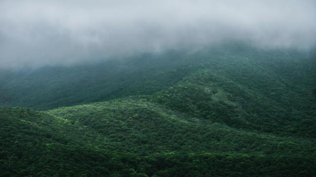 仙境般的云雾森林世界