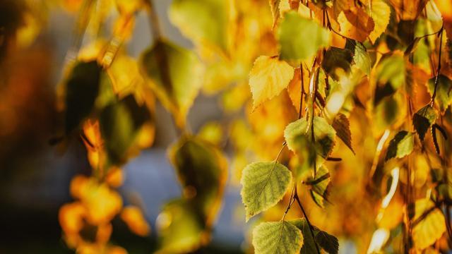 秋天萧瑟凄美自然风光