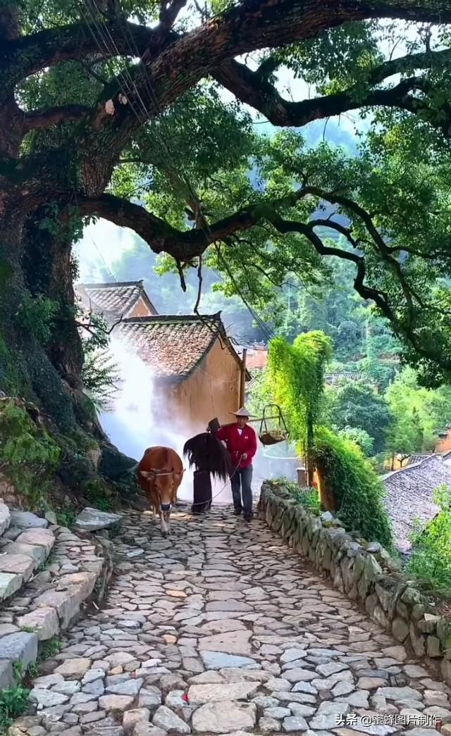 乡村生活真实风景头像壁纸